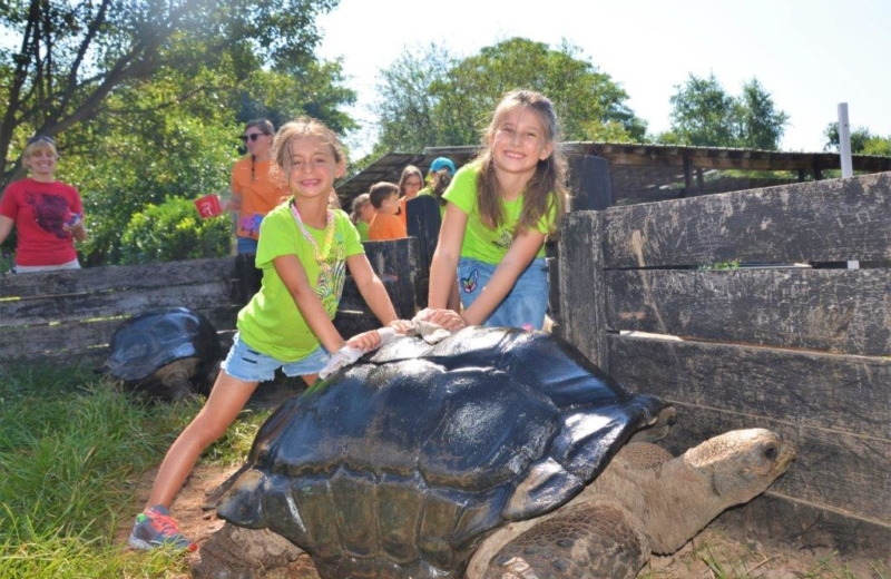 Two girls petting a tortoise
