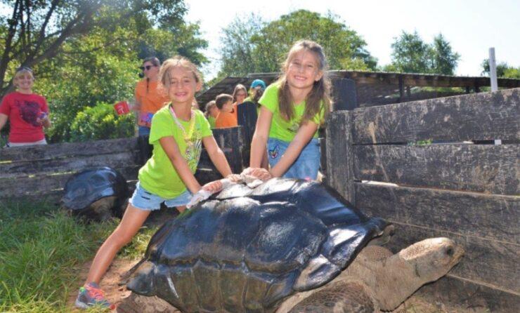 Children petting a tortoise